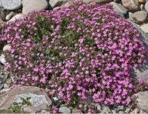creare  giardino roccioso