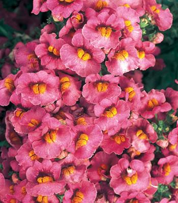 Sunsatia Raspberry