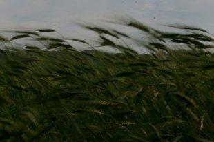 Attenzione al vento