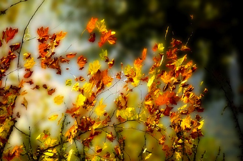 Lo spettacolo autunnale offerto dallle foglie