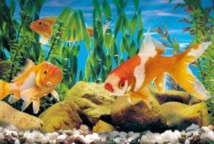 La vita nell'acquario