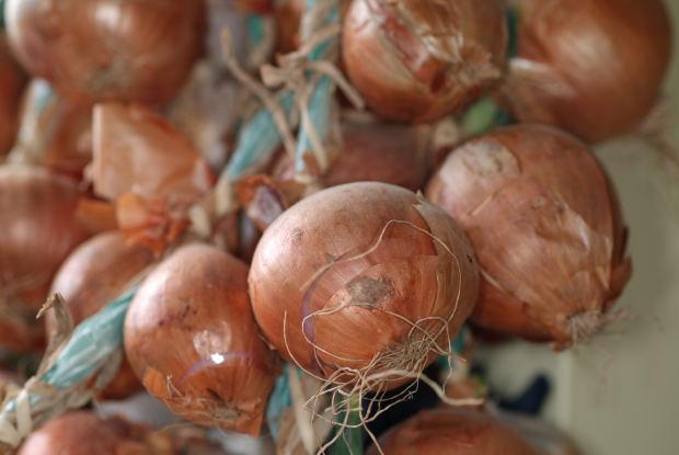 Cipolle invernali