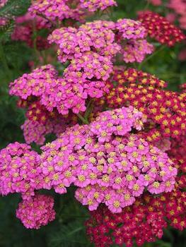 Il giardino in piena estate bordature aiuole fiorite for Aiuole fiorite immagini