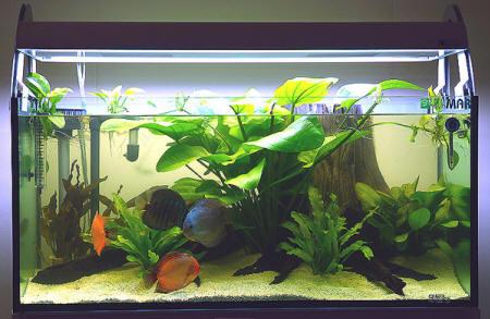 Scegliere le piante per l acquario domestico for Acquario da giardino