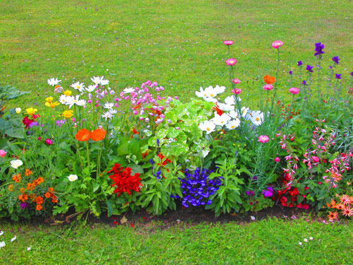 Ben noto Le piante stagionali esplodono in tutta la loro bellezza. Come  MS24