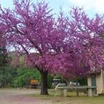giardino in primavera