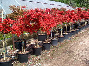 E\' tempo di piantare un nuovo albero in giardino - Giardinaggio ...