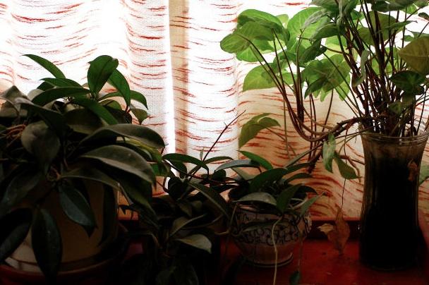 Casa immobiliare accessori piante particolari da coltivare for Piante da comprare