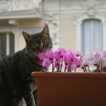 Piante velenose per i gatti