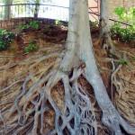 albero giardino