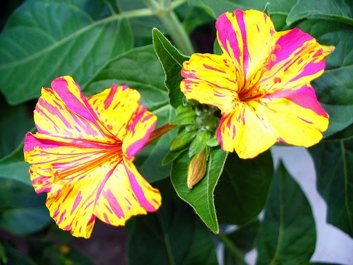 fiori gialli stagionali