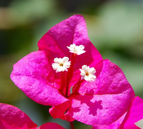 Tipi di fiori differenti e infiorescenze giardinaggio for Piante fiori