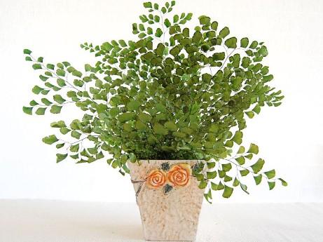 Innaffiare le piante d appartamento tecniche di for Irrigazione piante
