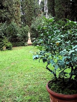 Coltivare Agrumi In Vaso