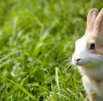 Coniglio in giardino