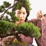 Curare i bonsai