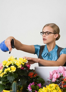 Curare le piante al ritorno dalle vacanze giardinaggio for Curare le piante
