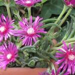 coltivare in vaso