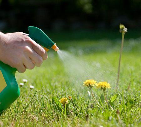 Pronto soccorso per le piante contro erbacce e afidi for Diserbante per erbacce