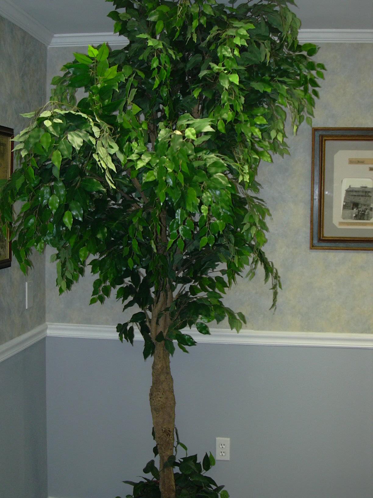Домашняя фуксия: фото комнатного цветка, сорта и уход в 66
