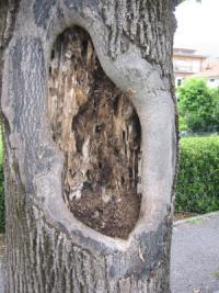 Ferite alberi