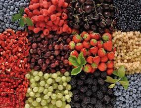 Piante Di Frutti Di Bosco : Lamponi proprietà benefici e ricette orme dell anima