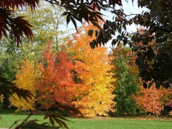 Colori dell autunno riempiono di allegria i giardini delle nostre