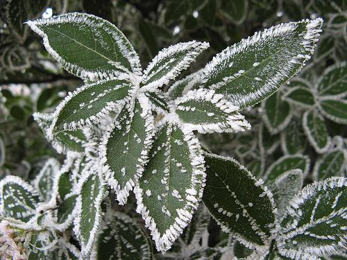 Coltivare in inverno la brina un fenomeno molto comune a for Cosa piantare a dicembre
