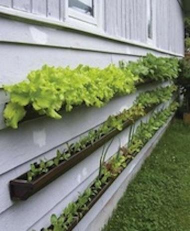 poco spazio? coltiva le erbe aromatiche in pareti verticali ... - Piante Per Giardini Verticali
