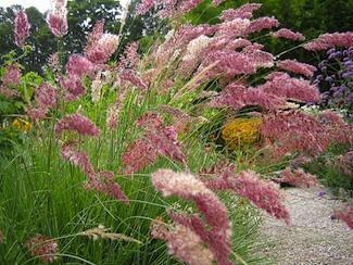 Al mare o in montagna curare il giardino e l orto in for Piante graminacee ornamentali