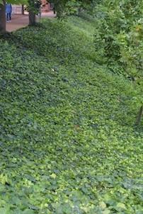 Soluzioni alternative al manto erboso nel prato in ombra for Soluzioni alternative al giardino