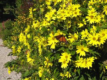 Fiori Gialli Da Giardino.Fiori Gialli Allegri Anche In Autunno Giardinaggio Piante E Fiori