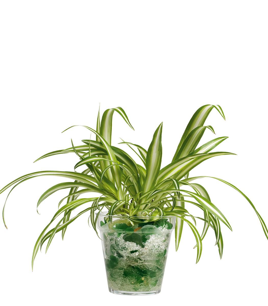 Giardino stilizzato con piante particolari da giardino for Prezzi piante da giardino