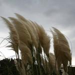 L'azione del vento potrebbe danneggiare le piante