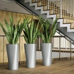 Le piante in casa