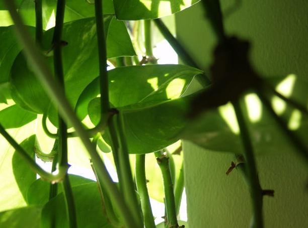 Le piante necessitano di luce