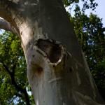 Lesione tronco