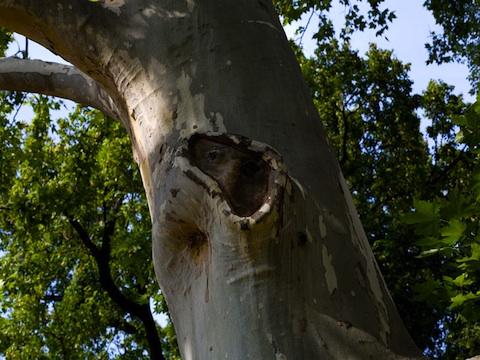 Come curare le ferite degli alberi dispositivo arresto for Tronco albero arredamento