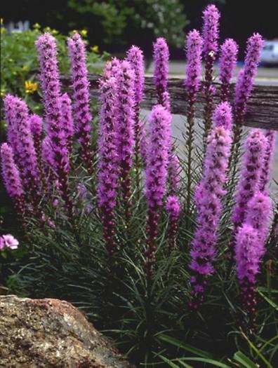 Mobili lavelli fiori perenni per aiuole for Piante perenni per bordure