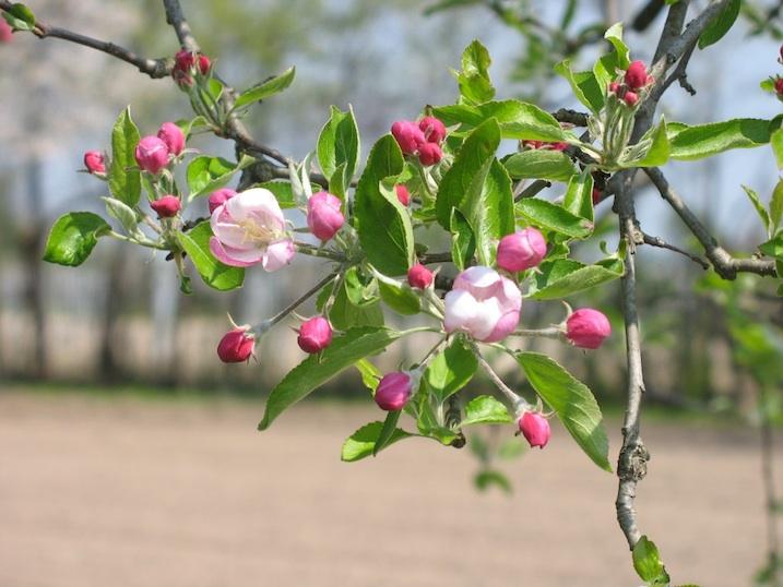 fiori da giardino giardino fiorito : Pin Albero Fiorito on Pinterest