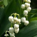 bordure e aiuole fiorite