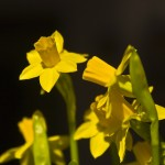 Narciso Tete – à – tete