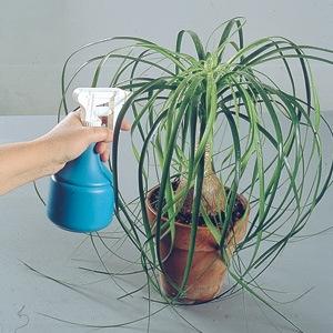 Nebulizzate le piante per stabilire il giusto grado di umidi