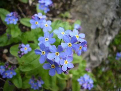 fiori nel  prato
