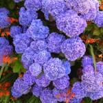fiori all'ombra