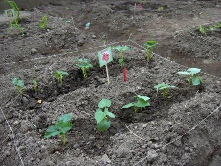 I lavori di settembre cosa fare nell orto e nel frutteto for Cosa piantare nell orto adesso