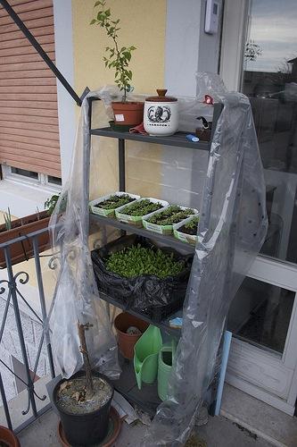 Orto urbano o orto sul balcone?Idee per coltivare in città ...