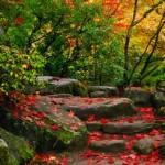 Osservare il foliage in Giappone