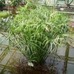 Innaffiare le piante d'appartamento