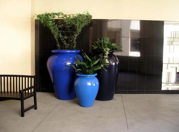 Coltivare piante in casa –I parte - Giardinaggio Piante e Fiori